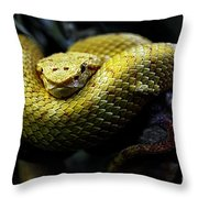 Animals 39 Throw Pillow