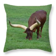 Ankole Cattle Eating Throw Pillow