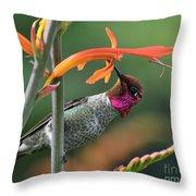 Anna's Hummingbird 1 Throw Pillow