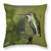 Anna's Hummingbird 3 Throw Pillow
