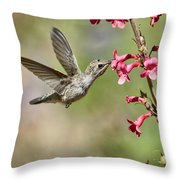 Anna's Hummingbird And The Penstemon  Throw Pillow