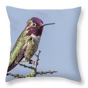 Anna's Hummingbird Perched Throw Pillow