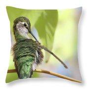 Anna's Hummingbird - Preening Throw Pillow