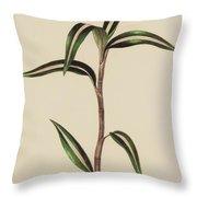 Anoectochilus Striatus Throw Pillow