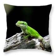 Anole 15 Throw Pillow