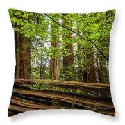Another Split Redwood Throw Pillow