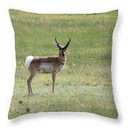Antelope 3 Throw Pillow