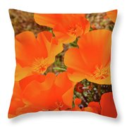 Antelope Valley Poppy Portrait Throw Pillow