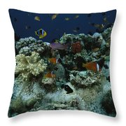 Anthias Fish, Anemonefish And Basslets Throw Pillow