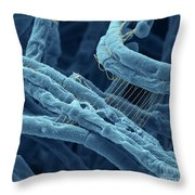 Anthrax Bacteria Sem Throw Pillow by Eye Of Science and Photo Researchers
