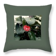 Anthurium Flower  Throw Pillow