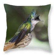 Antillean Crested Hummingbird On Stick Throw Pillow