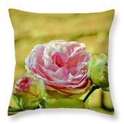 Antique Pink Rose Throw Pillow