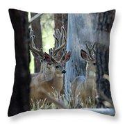 Antlers Galore Throw Pillow