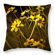 Anza Borrego Desert Sunflower 4 Throw Pillow