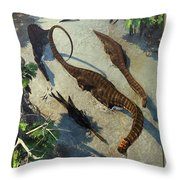 Apatosaurus From Above Throw Pillow