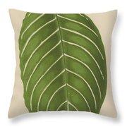 Aphelandra Leopoldii  Throw Pillow