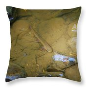 Appalachian  Native Throw Pillow by Randy Bodkins