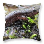 Appalachian Seal Salamander Throw Pillow