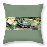 Appalachian Slimy Salamander Throw Pillow