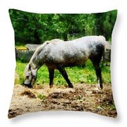 Appaloosa Eating Hay Throw Pillow
