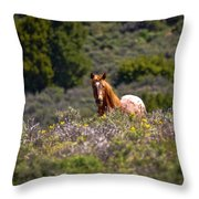 Appaloosa Mustang Horse Throw Pillow