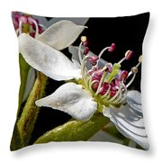 Apple Blossem In Sunlight Throw Pillow