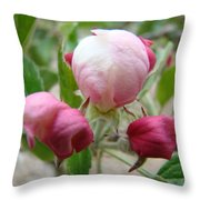 Apple Blossom Buds Art Prints Spring Baslee Troutman Throw Pillow