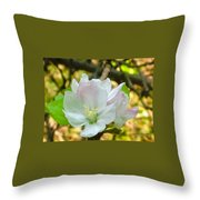Apple Blossom Close-up Throw Pillow