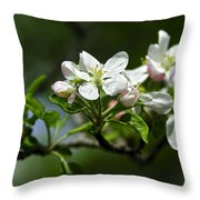 Apple Blossom In Iowa Throw Pillow