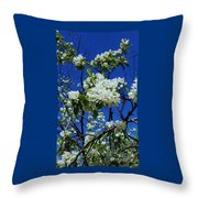 Apple Blossoms # 2 Throw Pillow