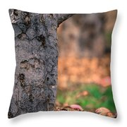 Apple Not Far From Tree Throw Pillow