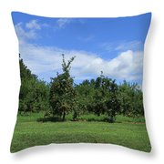 Apple Orchard At Vineyard Throw Pillow