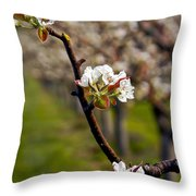 Apple Promise Throw Pillow