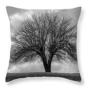 Apple Tree Bw Throw Pillow