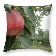 Apples 101010 Throw Pillow