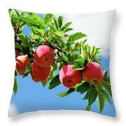 Apples On A Branch Throw Pillow