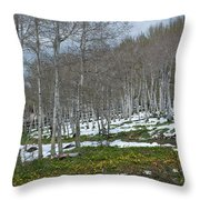 Approaching Spring In The Aspen Forest Throw Pillow by Cascade Colors