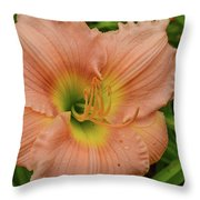 Apricot Day Lily Throw Pillow
