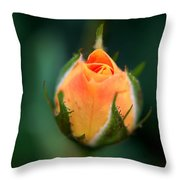 Apricot Rose Bud 1 Throw Pillow