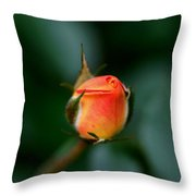Apricot Rose Bud 2 Throw Pillow