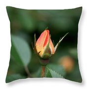 Apricot Rose Bud 3 Throw Pillow