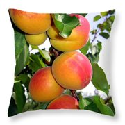 Apricots Throw Pillow by Will Borden