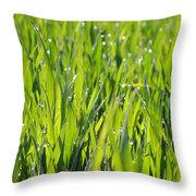 April Dewdrop Fairylights Throw Pillow