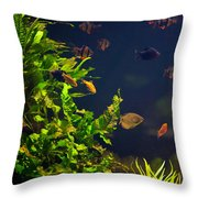 Aquarium Fish And Plants In Zoo Throw Pillow