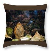 Aquarium Stones Arrangement Throw Pillow