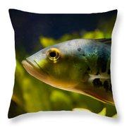 Aquarium Striped Fish Portrait Throw Pillow