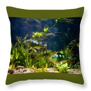 Aquarium Striped Fishes Group Throw Pillow