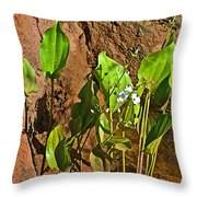 Aquatic Arrowhead In Iguazu Falls National Park-argentina  Throw Pillow