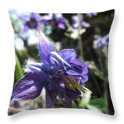 Aquilegia -  Columbine Throw Pillow